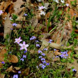 Thumb of 2014-03-29/wildflowers/1a7432