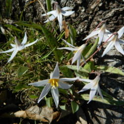 Thumb of 2014-03-29/wildflowers/1ea4c9