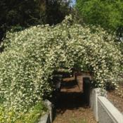 Location: Historic Rose Garden, Historic City Cemetery, Sacramento CA.Date: 2014-03-30