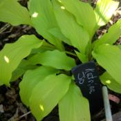 Location: my hosta bedDate: 4-2014early spring color