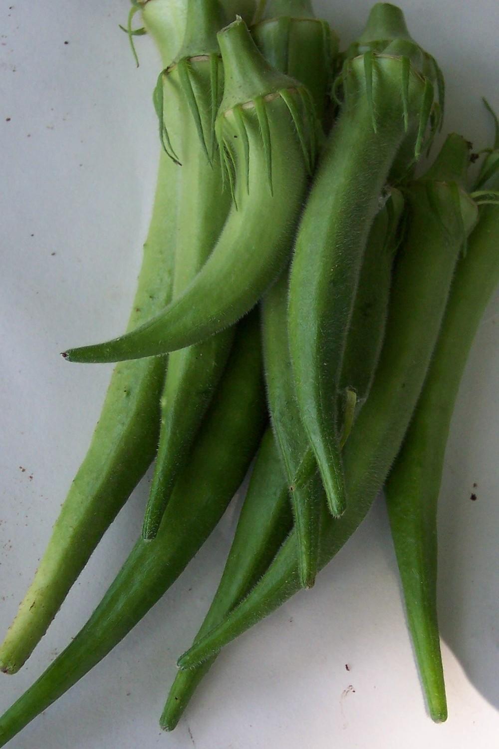 Okra Plant Care and Collection of Varieties Gardenorg