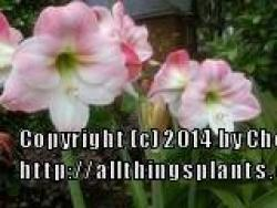 Thumb of 2014-04-20/ShadyGreenThumb/c8ee2f