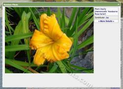 Thumb of 2014-04-20/daylily/47426d