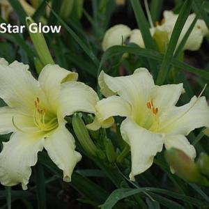 Photo Courtesy of Dancing Daylily Gardens. Used with permission.