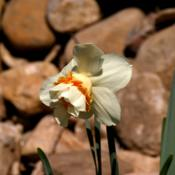Location: My Garden, UtahDate: 2014-04-14opening