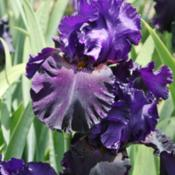 Location: At Napa Iris GardensDate: 2014-04-26