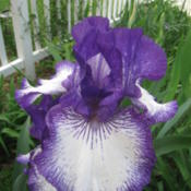 Location: Kannapolis, NCDate: 2014-04-29I'm always so glad to see this iris in bloom!