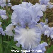 Photo courtesy of Napa Country Iris Gardens