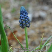 Location: My garden in N E Pa. Date: 2014-05-07