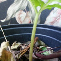 Thumb of 2014-05-16/ShadyGreenThumb/36396d