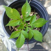Location: Houston areaDate: 2014-05-16A young plant
