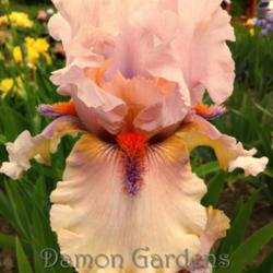 Thumb of 2014-05-17/DamonGardens/0e6b44