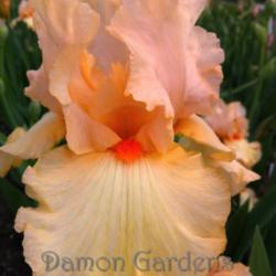 Thumb of 2014-05-17/DamonGardens/509acf