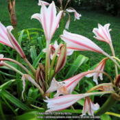 Location: my garden square bedDate: 2014-05-18