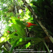 Location: Atlantic rainforest, Paraty, BrazilDate: 2010-02-03