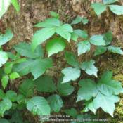 Location: Great Smokey Mountains National Park, TennesseeDate: 2014-05-27