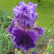 Location: My Garden in Janesville, WIDate: 2014-05-28