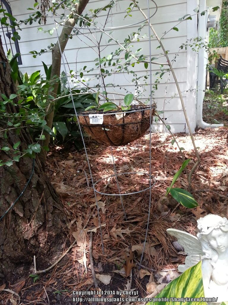 All Things Gardening Forum Need Cheap Plant Stand Ideas