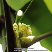 Location: Atlantic rainforest, Paraty, BrazilDate: 2014-01-17Female flower