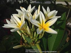 Thumb of 2014-06-01/GigiPlumeria/e309d4