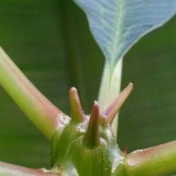 Thumb of 2014-06-01/ShadyGreenThumb/7b3b84