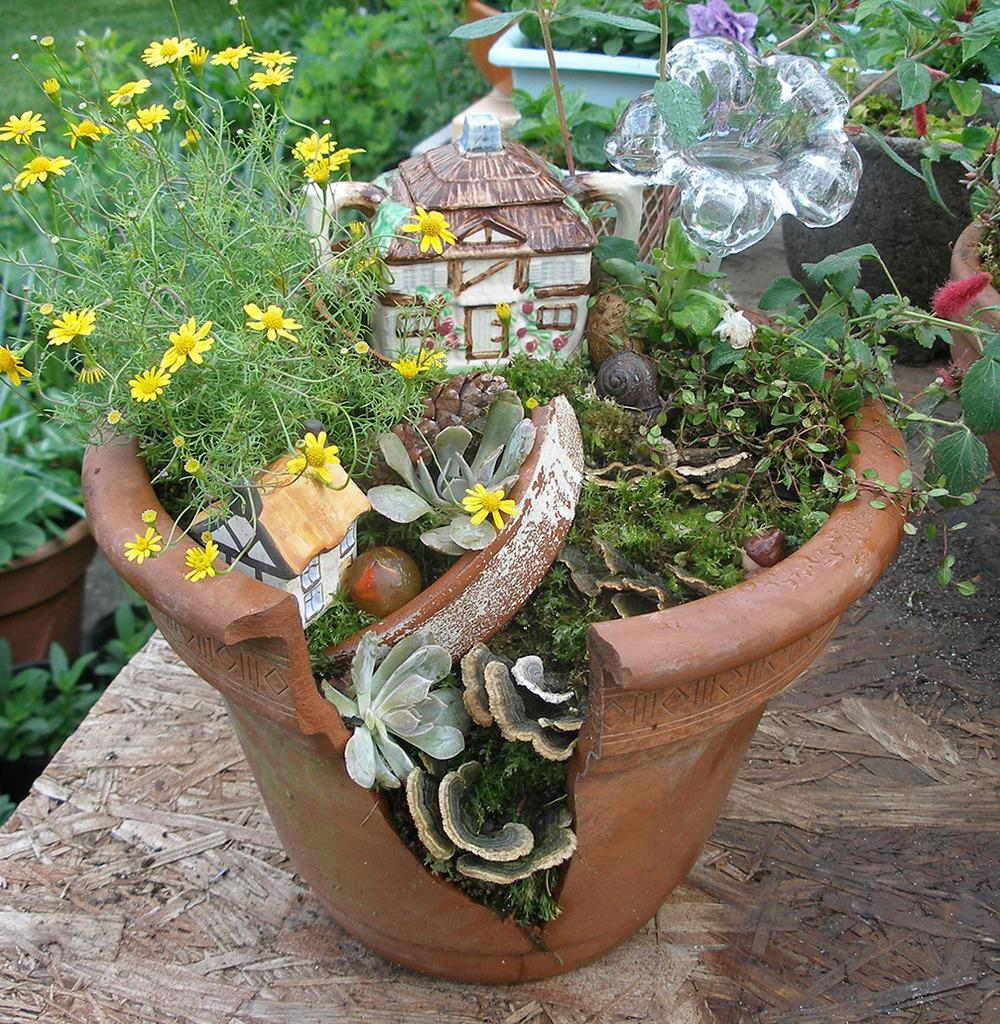 Miniature gardening forum this year 39 s community plant What are miniature plants grown in pots called