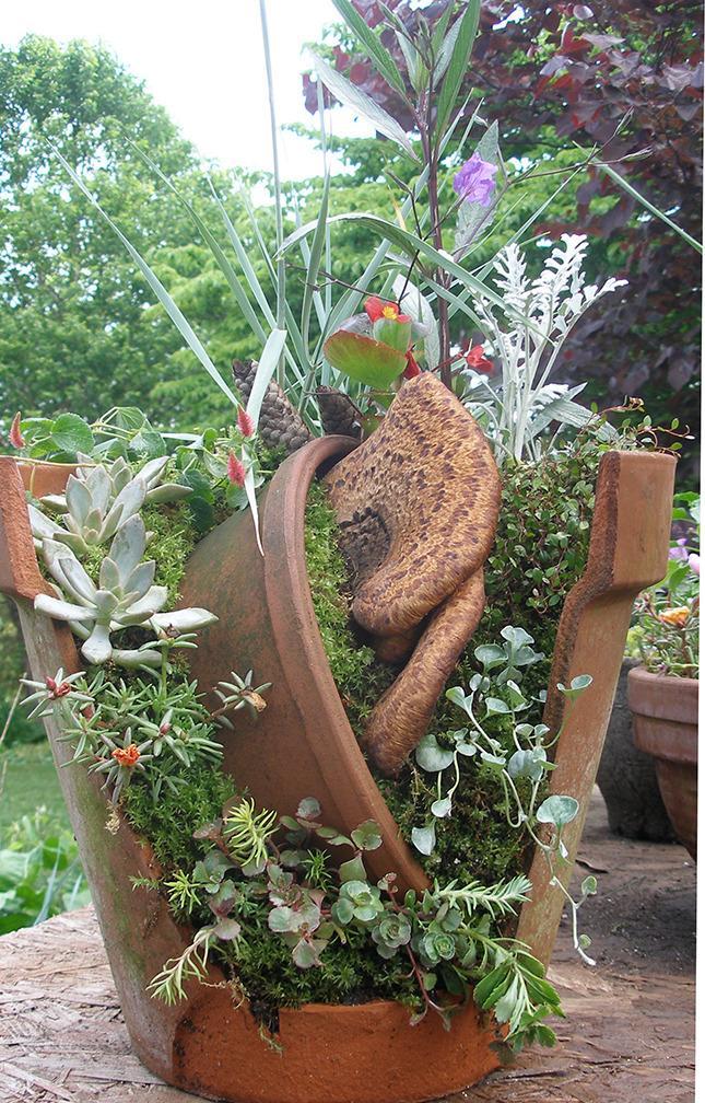 Miniature gardening forum this year 39 s community plant sale broken pot exhibits - Fairy garden containers for sale ...