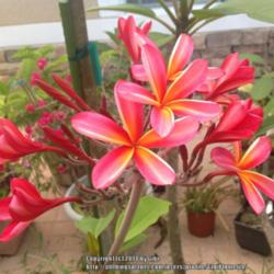 Thumb of 2014-06-07/GigiPlumeria/5de95a
