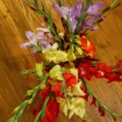 Location: murchison, txDate: 2014-06-18 gladiolus bouquet