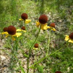 Thumb of 2014-06-21/wildflowers/65a730