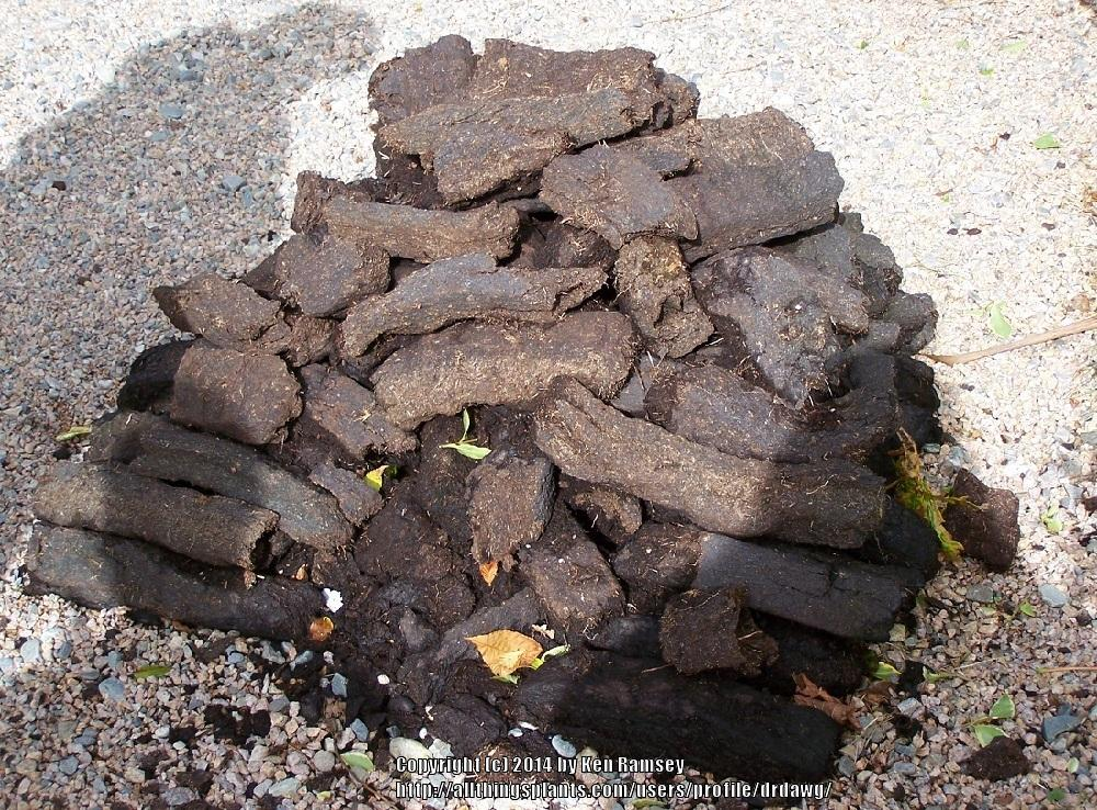 how to use peat moss