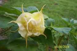 Thumb of 2014-06-30/WilliamByrd/9d926a
