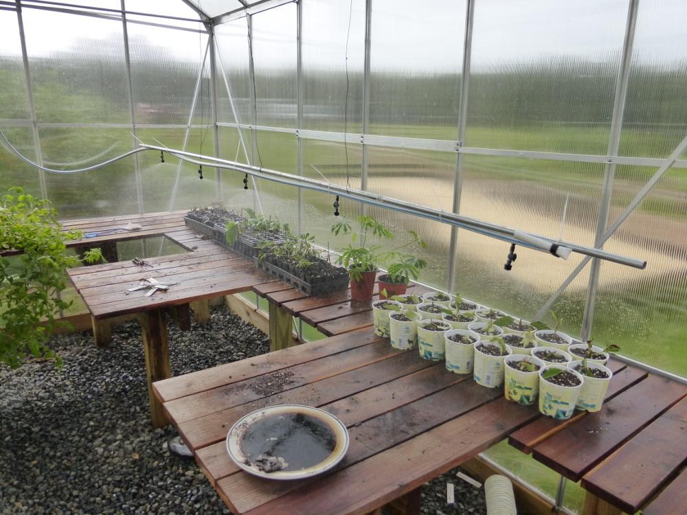Greenhouses Forum Automatic Valves For Misting Systems
