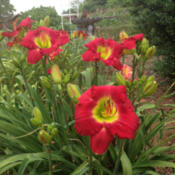 Location: 2014 National Tour Garden in North CarolinaDate: 2014-07-01What bold color !