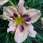 Location: My Garden in Janesville, WIDate: 2014-07-05