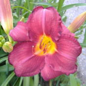 Location: My Garden in Janesville, WIDate: 2014-06-29