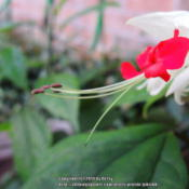 Location: my garden Date: 2014-07-07
