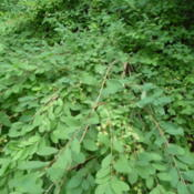 Location: Indiana zone 5Date: 2014-07-12