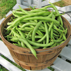 Beans and Asparagus growing guide