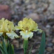 Location: My garden in southeast NebraskaDate: 2014-05-03