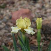 Location: My garden in southeast NebraskaDate: 2014-05-02