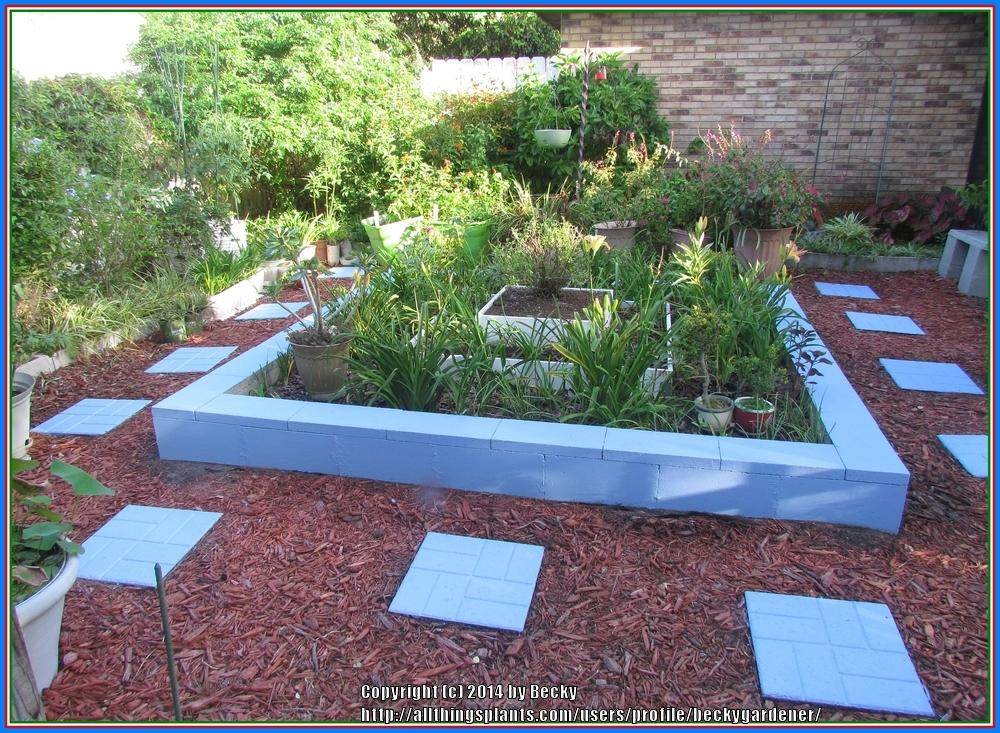Garden structures forum raised beds what do you use for - Painting cinder blocks for garden ...
