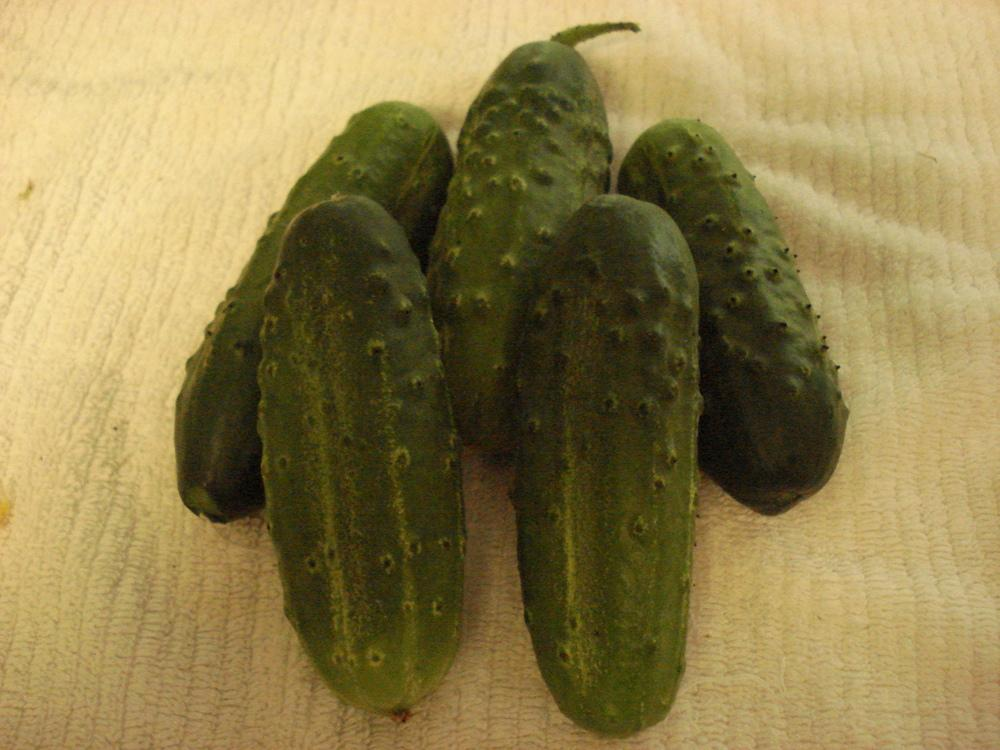 how to take care of cucumber plants