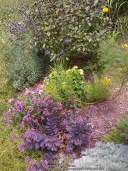 Thumb of 2014-08-01/Catmint20906/908622