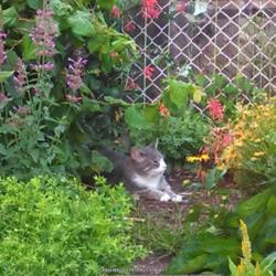 Thumb of 2014-08-05/Catmint20906/eb6c0a