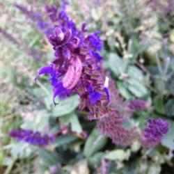 Thumb of 2014-08-19/Catmint20906/612a64