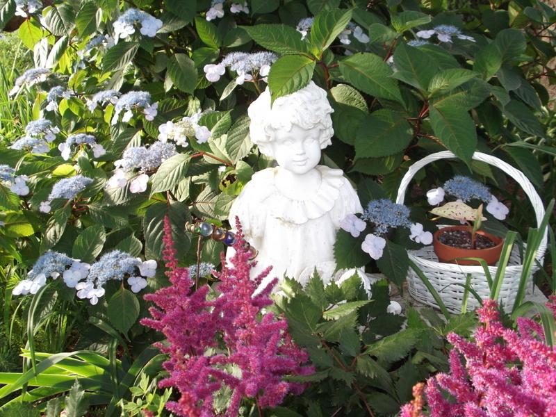 Photo of Lacecap Hydrangea (Hydrangea macrophylla 'Lady in Red') uploaded by pirl