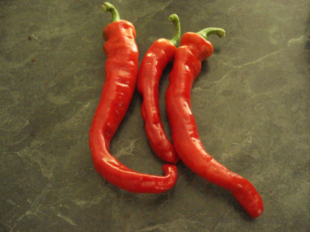 Photo of Hot Pepper (Capsicum annuum 'Maule's Red Hot') uploaded by Weedwhacker