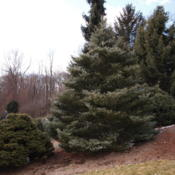 Location: Michigan State University Hidden Lake Garden, Tipton, MIDate: 2012-02-18