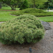Location: Michigan State University Hidden Lake Garden, Tipton, MIDate: 2011-05-25
